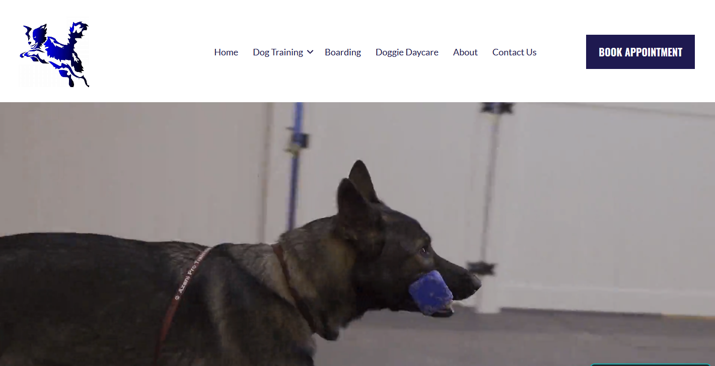 azaini-pro-dog-training-headstorm-studios-website-design-seo